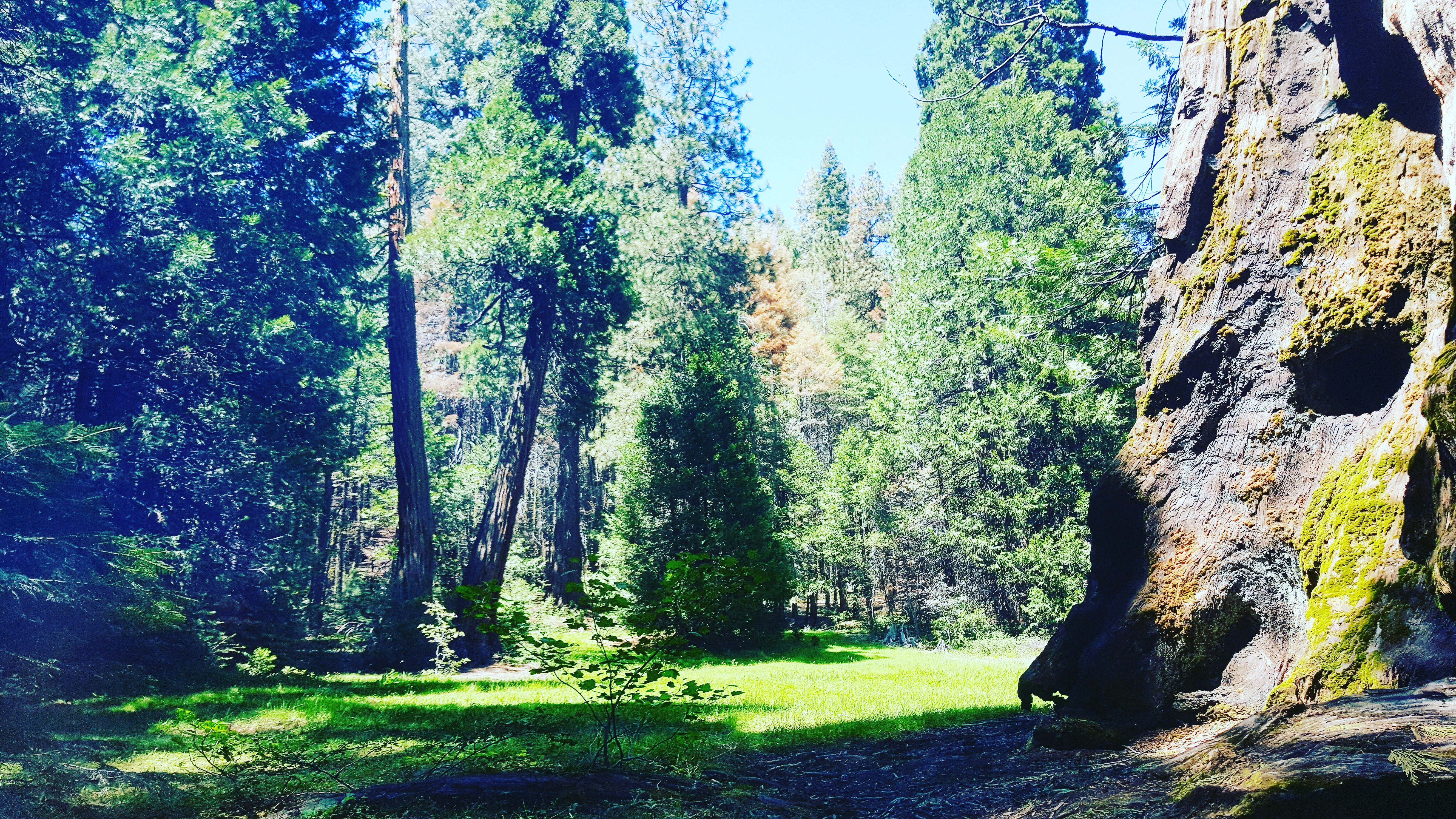 Nedler Grove Campground Meadow