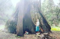 Free Camping Near Yosemite