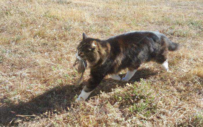 Briar Kitty Cats Hunt