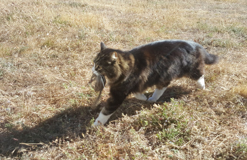 Briar Kitty Cats Hunt